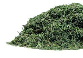 Vibrant and fresh green Dill Weed Spice pictured in this close up from Organic Teas Canada.