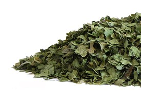 Bright green organic cilantro leaves are pictured on a bright white background.  Organic Teas Canada dot com presents a wonderful selection of non-GMO, non-irradiated, non-sulphited fresh organic teas, herbs and spices.